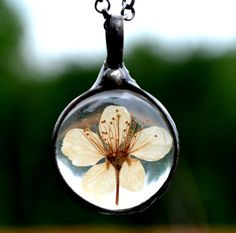 A real wild pear blossom dry pressed and encased in glass. Ive picked and dried real pear blossoms to make this sweet terrarium pendant. Great gift for the gardener, floral lover, or someone who loves natural jewelry. Details: Pear Blossom Pendant: 1 1/2H x 1W (38mm x 25mm) Your choice of 22 figaro chain or 24 rolo chain (shown) select at checkout (55cm or 60cm) Arrives in gift box $4.25 shipping USPS 1st Class domestic, includes tracking. Please see the shipping tab above for expedited...
