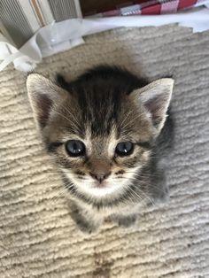 The little cutiest kitten