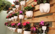 Cultive plantas em espaços reduzidos - Reaproveitamento de garrafas pet.
