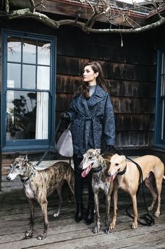 It's the perfect alternative to classic black so today we are sharing our favorite winter blues. Greyhound Breed, Go Dog Go, Greyhound Pictures, English Shepherd, Dog Rooms, Grey Hound Dog, Italian Greyhound, Dog Quotes, Animales