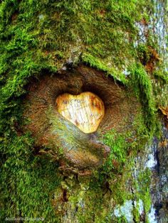 rosiesdreams:  In the heart of the tree By Alex Husarin Photography
