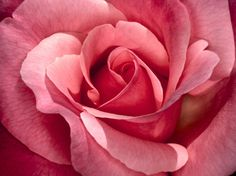 a perfect rose...just like you!!