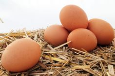 How to Cook Duck Eggs    Duck eggs are just as tasty and versatile as farm-fresh chicken eggs, but need to be cooked differently to maximize their flavor.