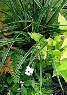 Download the Refreshing Containers heading into Fall and Winter Article & Plant Lists - http://portlandnursery.com/plants/container-gardens/refreshingcontainers.shtml