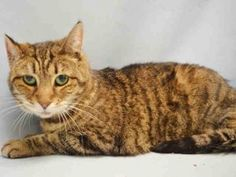 ***UNKNOWN 12/09/16***15 YEARS OLD -LOVELY & LOVING....AWESOME AVERAGE RATING... OWNER DIED - DUMPED WITH HOUSEMATE -NOT LISTED TONIGHT... NEEDS A WARM AND COZY HOME FOR THE HOLIDAYS!