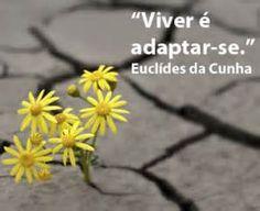 Pesquisa Como se adaptar a cultura brasileira. Vistas 17232.