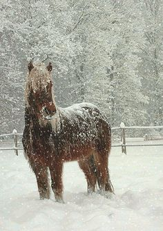 Growing up our horses had a barn to spend the winter in... they didn't have to be out in the snow if they didn't want to... Happy New Year! ...Horse in the Snow | GIF snow falling