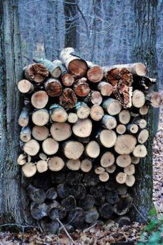 Viel Holz für einen langen Winter.