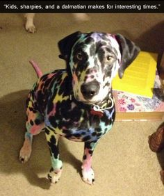 Kids, Sharpies and a Dalmatian.