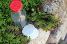 Pleťová voda zo skalnej ruže v záhone so skalničkami Plants