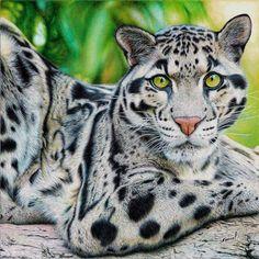 Clouded Leopard - Ballpoint Pen by VianaArts on DeviantArt
