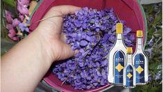 Kým pre niektorých súsymbolom nastupujúcej jari snežienky, iní si toto ročné obdobie nedokážu predstaviť bez fialiek. Prezradí ich nielen nápadná farba, ale predovšetkým nezameniteľná vôňa, ktorá sa nesie vzduchom široko-ďaleko.Málokto však vie, že fialka, ľudovo … Fiji Water Bottle, Health, Gardening, Author, Syrup, Salud, Health Care, Garten, Healthy