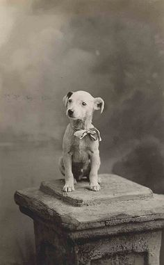 Pictures were such an ordeal back then; His owner must of had a lot of pride and love for his dog to want him photographed! #adorable