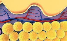Висцеральный жир: как избавиться от лишних сантиметров на талии