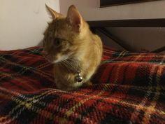 Sarman #cats #HD