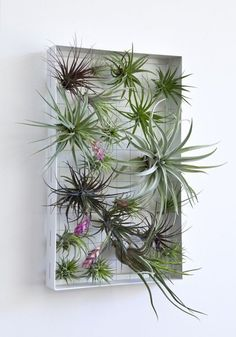 Create a living wall by attaching Tillandsia air plants to stainless steel cables strung on a lightweight, powder-coated aluminum frame designed by landscape architect Josh Rosen. It measures 11.5 inches by 19 inches and is sold without plants.