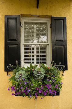 Day 112-Rainbow Row Window Box