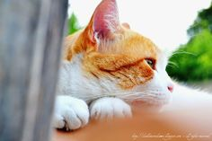 #cat #kitty #cats #gatti #gattino Catio, Wallpaper, Animals, Animaux, Animal, Wallpapers, Animales, Wall Decal, Animais
