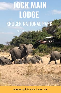 All you need to know about Jock Main Lodge, Kruger National Park, South Africa Kruger National Park, National Parks, Game Lodge, Best Games, Lodges, South Africa, Maine, Elephant, Animals