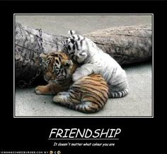 with  friendship or love it is colour blind!