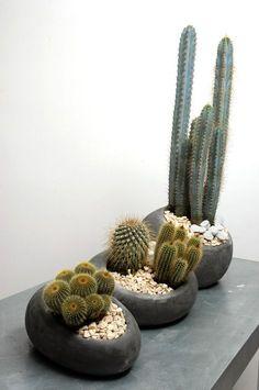 Plantación de cactus en contenedor