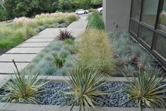 We could also fill in the space with different varieties of ornamental native grass and create a monochromatic garden which are modern.
