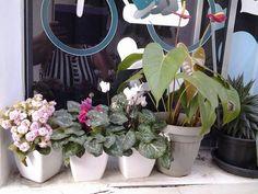 Minhas florzinhas