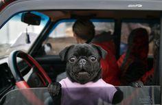 Hund im Kriegsgebiet an einem Armeestützpunkt im Osten der Ukraine. Am Donnerstag hatte der ukrainische Präsident Poroschenko angekündigt, Sonderverwaltungen mit Militärangehörigen und Zivilisten in der Konfliktregion Donbass zu gründen. Die prorussischen Separatisten protestierten gegen diesen Schritt.