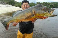 Temporada de Pesca esportiva  vai atrair dez mil turistas ao AM
