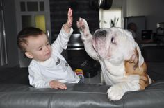 Best friends... English Bulldog