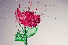 rose of water...