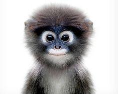 Monkey print, The Crown Prints, Nursery wall art, Safari animal prints, Safari nursery theme, Baby animal prints, Baby room wall art, Kids