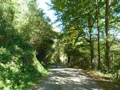 Sur la route d'Escanda, Roquiague, (montagne basque).