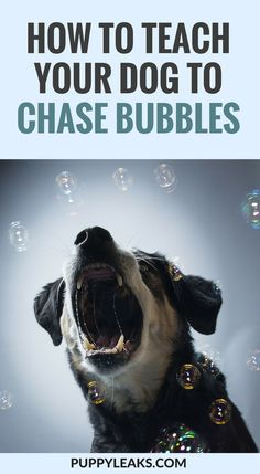 Looking for an easy way to exercise your dog? Train your dog to chase bubbles. Here's how to teach your dog to catch bubbles. Chasing bubbles is an easy game to play with your dog. Training Your Puppy, Dog Training Tips, Potty Training, Leash Training, Training Collar, Agility Training, Training School, Training Schedule, Crate Training