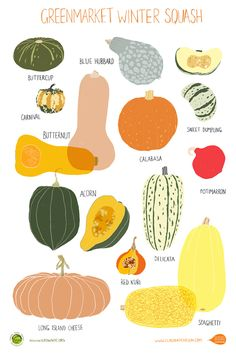 Winter Squash poster, Greenmarket-  she also has other cool posters with produce, NYC scenes, and more