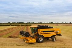 It is near the end of Canola harvesting season in Washington. Farmers, thank you for all of your hard work.