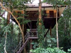 Kao Sok Tree House Resort Thailand located in one of the most beautiful rainforest in the world, surrounded with a beautiful forest view from Chieow Laan Lake, to the giant Rafflesia flower and numerous wildlife.