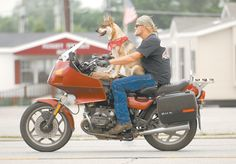 dogs on motorcycles - Google Search