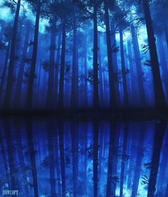 Deep *Blue ~ Mystical forest & reflection...