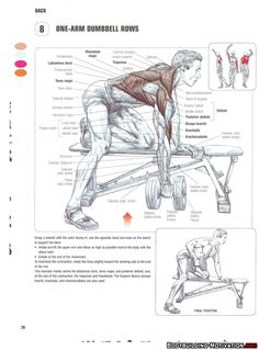 Training Anatomy - Back - One-Arm Dumbbell Rows