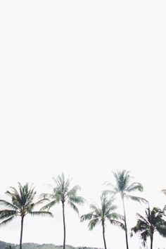 Get inspired to decorate your home with Backyard Palm Trees, many types which you may choose from. Transform your home feel like to be a tropical resort.