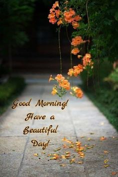 Positive and Inspiring Good Morning Wishes, Quotes & Images Good Morning Thursday, Good Morning Msg, Happy Morning, Good Morning Picture, Good Morning Messages, Autumn Morning, Good Morning Images Flowers, Good Morning Beautiful Images, Morning Pictures