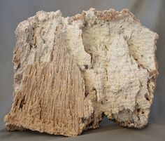 Large White Fossilized Coral Decorator Specimen Withlacoochee River Florida 14LB