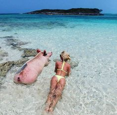 Swimming at Pig Island, Bahamas, tag your friend next to you 🐖 Photo by Pig Island Bahamas, Oh The Places You'll Go, Places To Travel, Snorkeling, Pig Beach, Exuma Bahamas, Wanderlust Travel, Cruises, Dream Vacations
