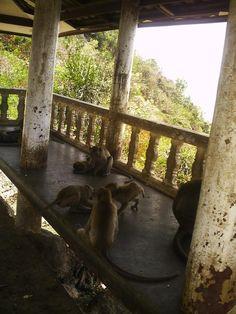 Monkeys Stole My Sani-Wipes