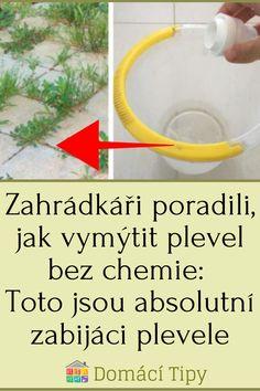 Zahrádkáři poradili, jak vymýtit plevel bez chemie: Toto jsou absolutní zabijáci plevele Aloe, Gardening, Diy, Chemistry, Bricolage, Garten, Diys, Lawn And Garden, Handyman Projects