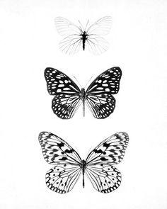 Mariposas (butterflies)