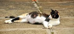 The 5 Stages of Cat Pregnancy | Catster