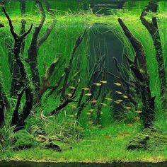 #aquascape #aquascaping #green #plants #planted #plan #nature #design https://m.facebook.com/aquaJam11