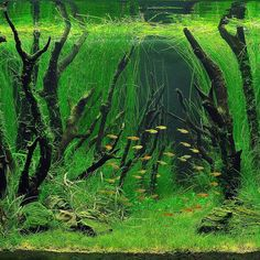 #aquascape #aquascaping #green #plants #planted #plan #nature #design https://m.facebook.com/aquaJam11